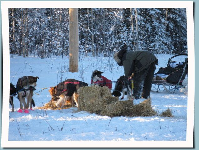 caring for his dogs at a check point of the 2014 Yukon Quest International Sled Dog Race i