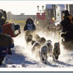 Team starting at a Yukon Quest International Dog Sled Race