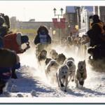 Team starting at a Yukon Quest International Dog Sled Race